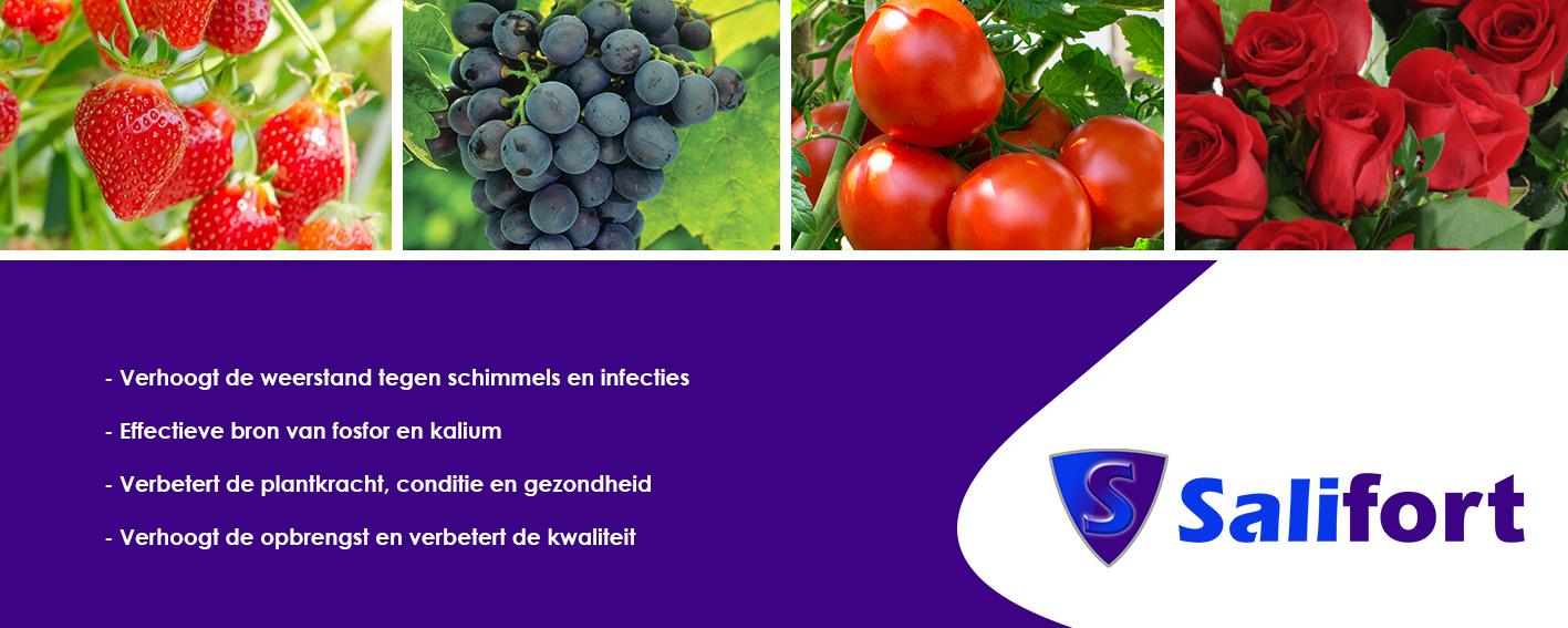 Salifort banner NL v1